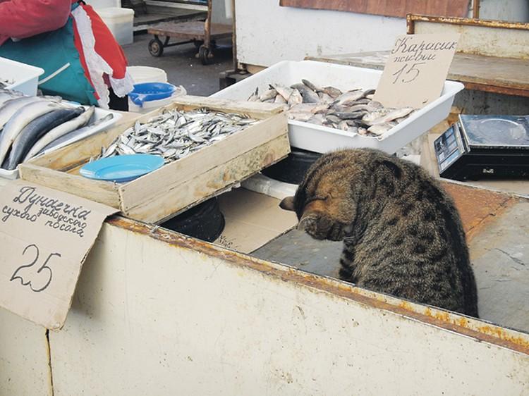 Рыбные ряды на Привозе: можно только облизываться... Фото: Сергей ПОНОМАРЕВ