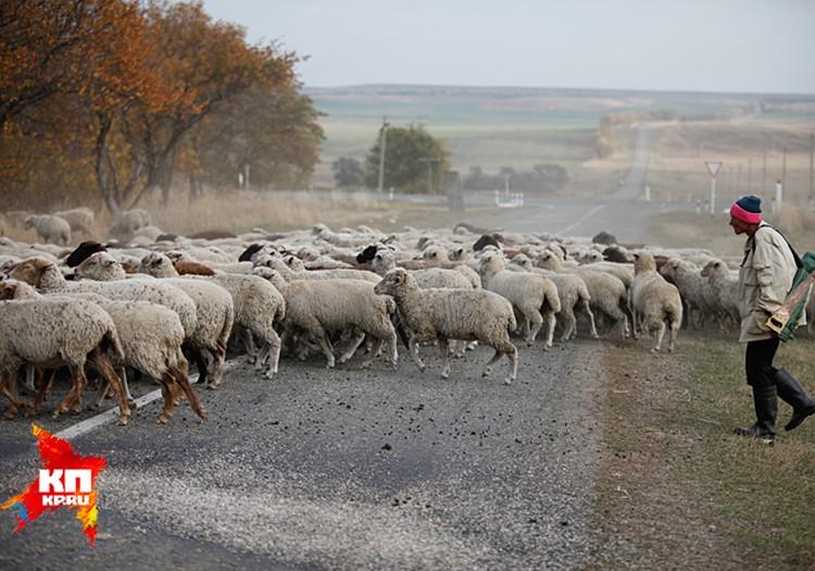 Есть люди, которые якобы держат личное подсобное хозяйство, у которых отара – 14 тыс. овец