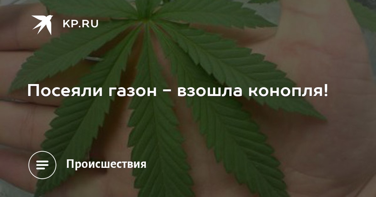 Конопля Магазин Новокузнецк Амф Продажа Арзамас