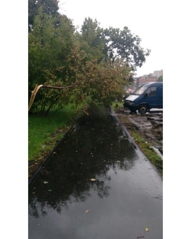 Вот тебе и осень! Около остановки напротив Эго Молла упало дерево. Будьте осторожнее, соседи! #Медведково #ураган
